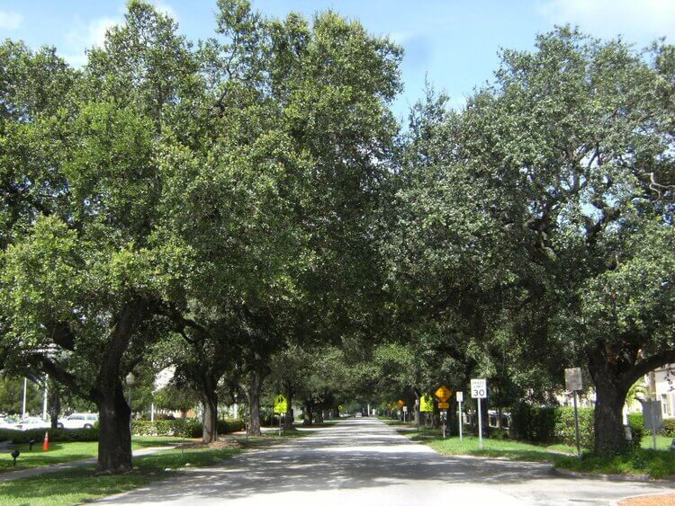 MAJESTIC ROADWAY ENTRY LINED WITH LIVE OAKS