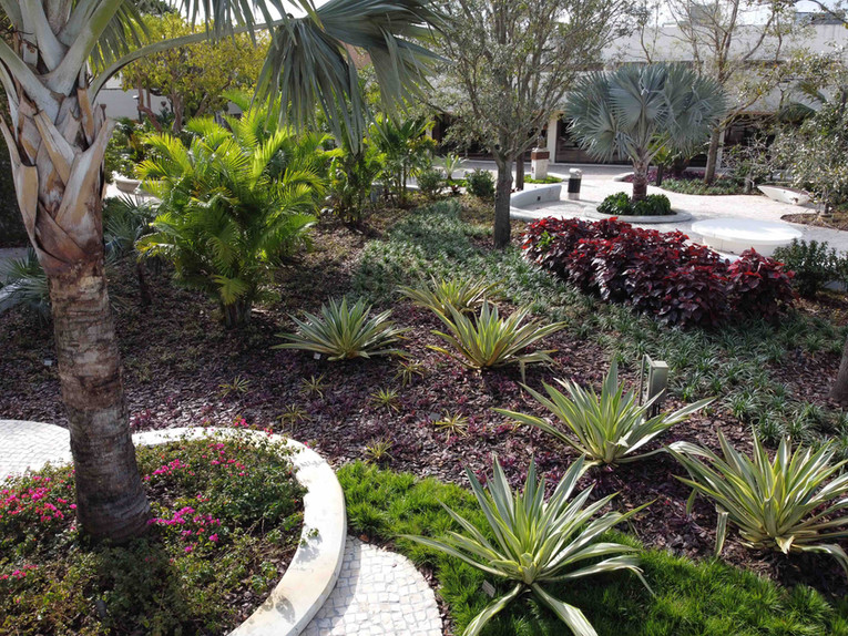 Landscape Design Belen Jesuit School, Miami Florida