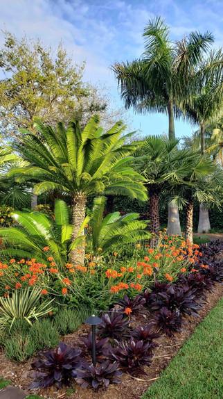 Albert Arazoza Landscape Design