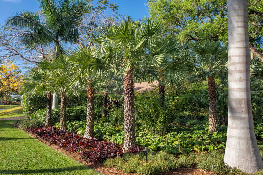 Row of Palm Trees as part of a formal la