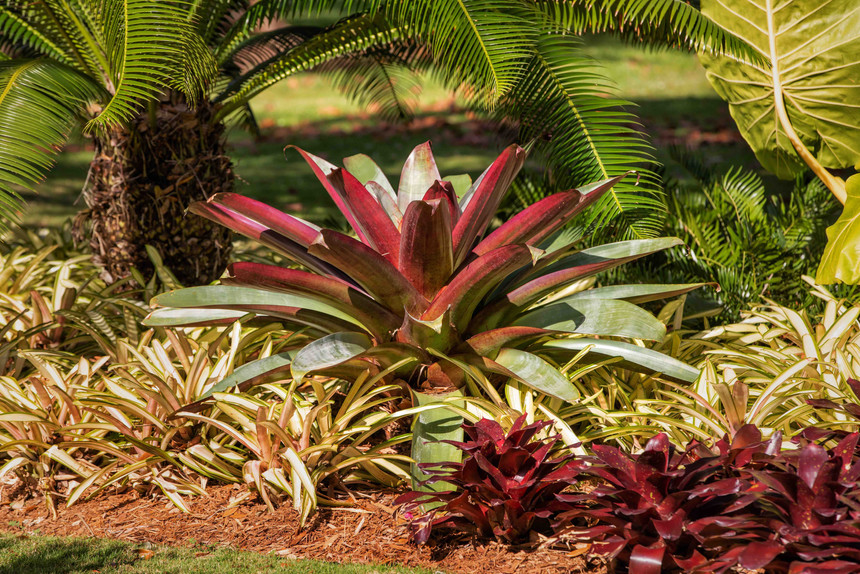 Plant and Garden Landscaping.jpg