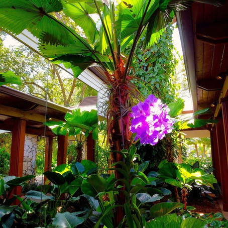 The Garden of Charlie and Maria Arazoza, Miami, Florida