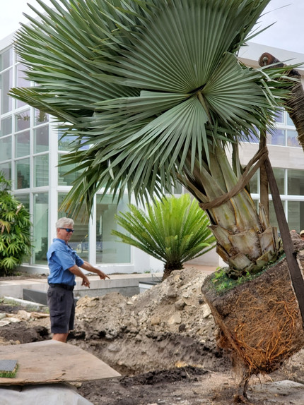 Pinecrest Miami Residence Landscape Design Construction 3.jpg