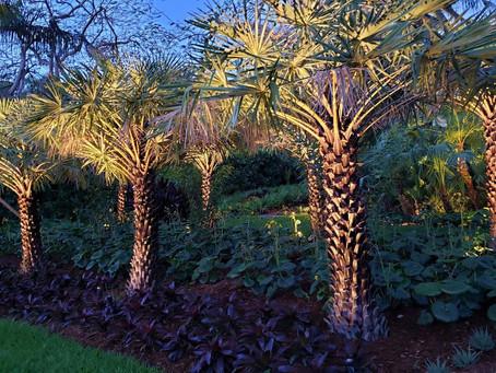 The Garden of Albert and Ana Arazoza, Miami, Florida