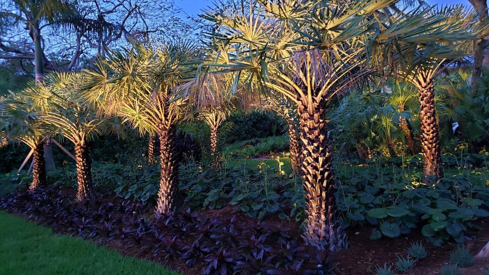 Palm Trees Landscape Design Miami Florida Residence
