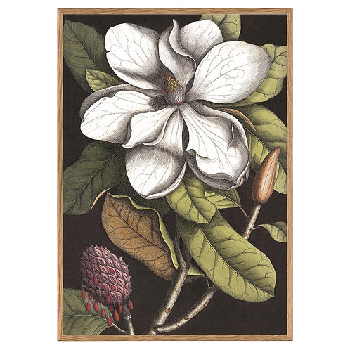 """Blooming White Magnolia 46"""" X 64"""" Wall Art"""
