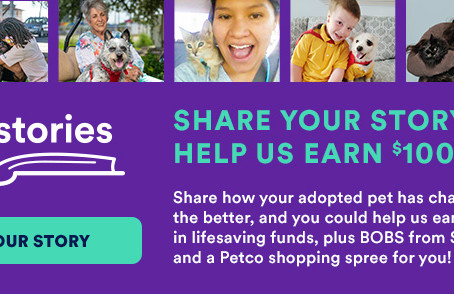 Share Your Love Story of Your Adopted Cara's House Pet and Help Us Earn $100K from Petco Love!