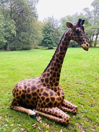 Girafee 2.jpg