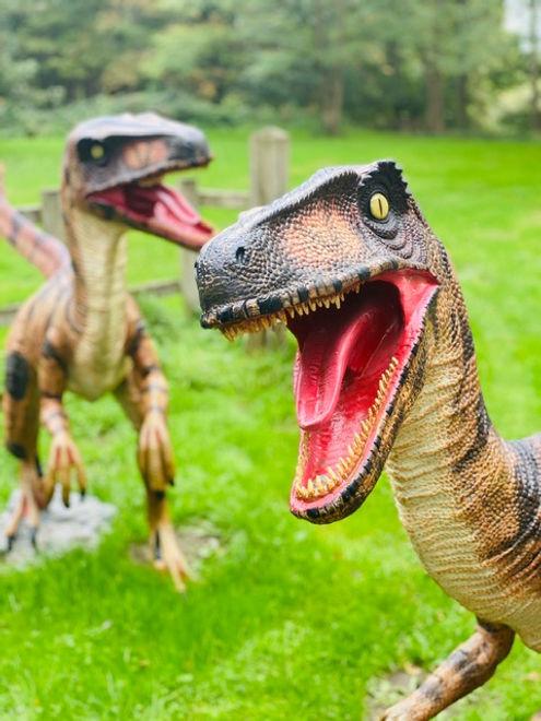 Raptors 2.jpg