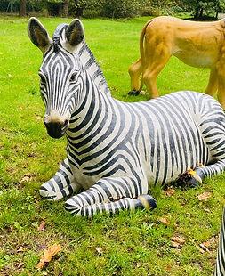 Zebra lying.jpg