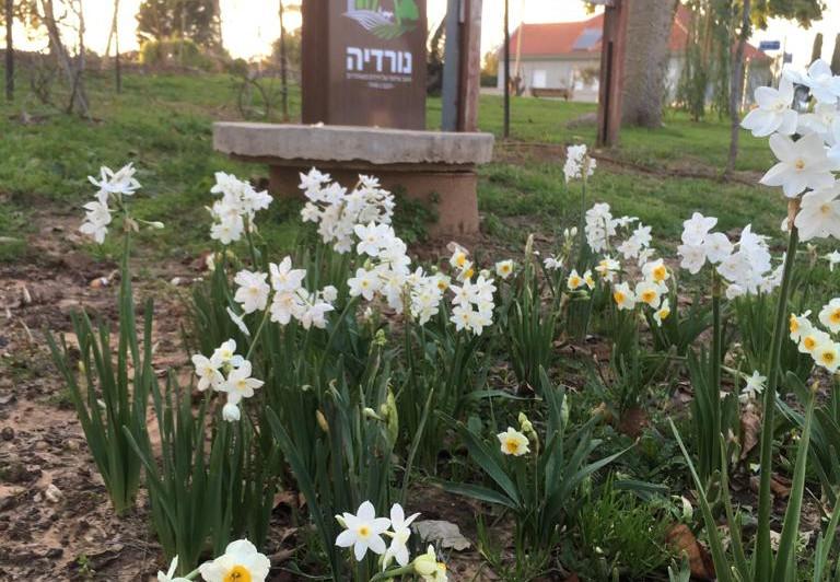פריחה והתחדשות אביבית