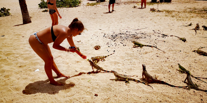 Feeding iguanas in Pinel Island