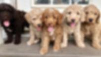puppys7.jpg