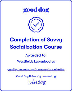 socialization badge.jpg