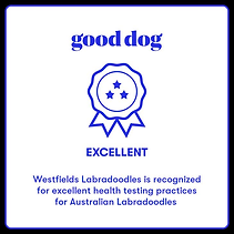 gooddog.png