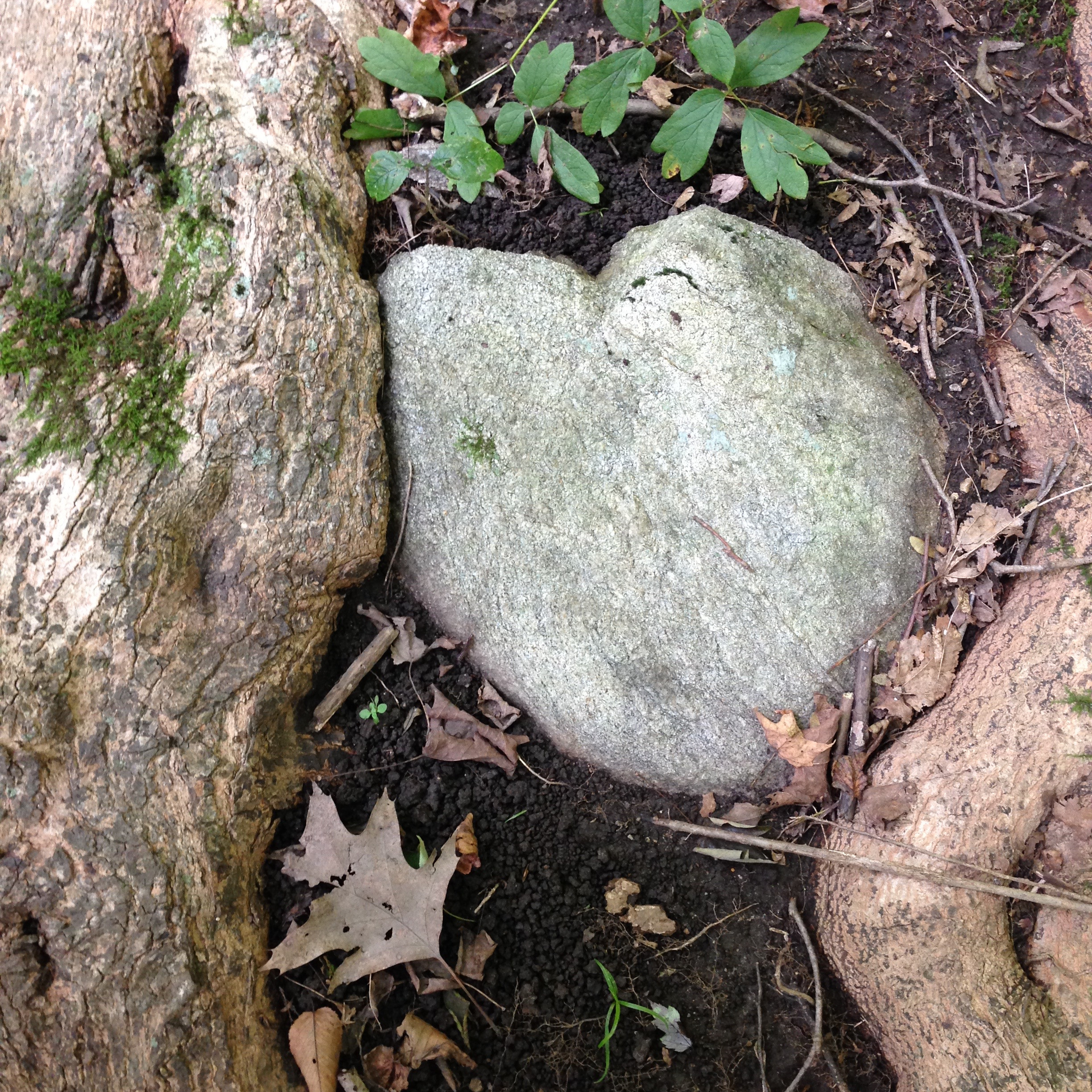 Nature/Forest Therapy Guided Walks