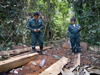 La comunidad nativaShipetiari crea Comité de Bosque para luchar contra la deforestación