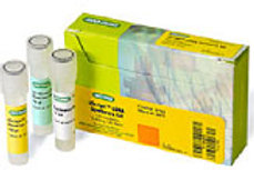 iScript cDNA synthesis kit - classic