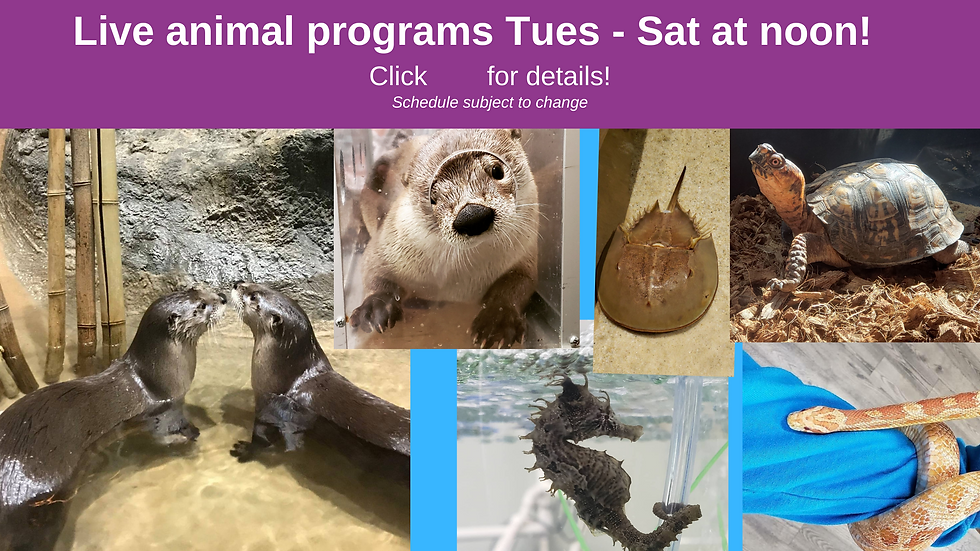 Eastern Shore Maryland Chesapeake Museum Live animal programs Tues - Sat at noon! website