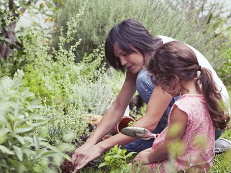 Votre jardin mérite-t-il d'être assuré?