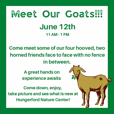 Meet Our Goats.png