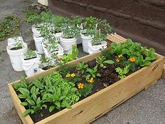 garden box.jpeg