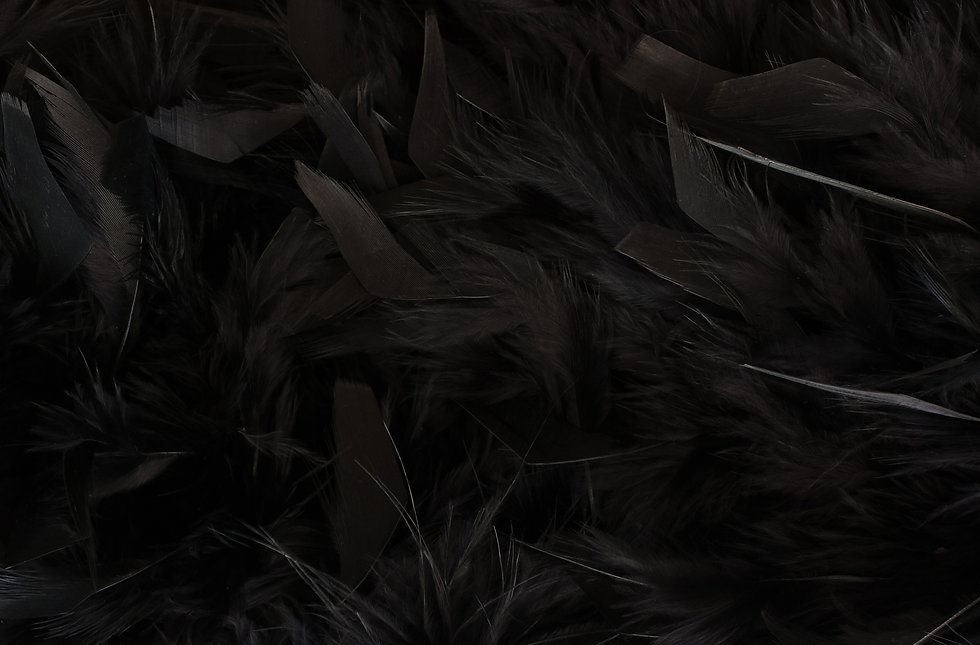 close up of texture - black feathers.jpg