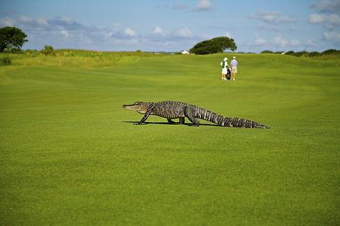 alligator-1593899_1280.jpg