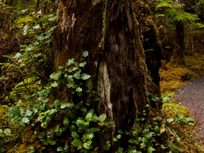 THE ART OF THE TONGASS