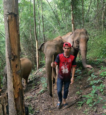 Walk in the jungle