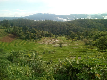 View on rice felds and mountains
