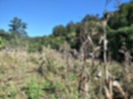 Old corn field