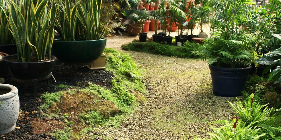 Black Pearl @Awbury Arboretum