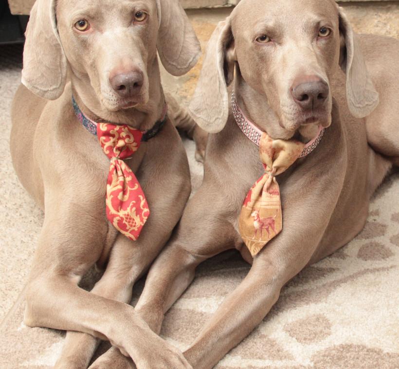 Silk dog ties