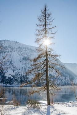 Elfenhaus Winter 17