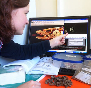CAREER PROFILES: Dr Hannah Russ Marine Zooarchaeologist