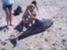 Bottlenose Dolphin - Whalefish.org