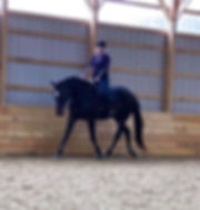 Marta_Hall_testimonial_Harley_horse2.jpg