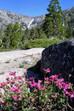 Summer Friday: Eldorado National Forest, California