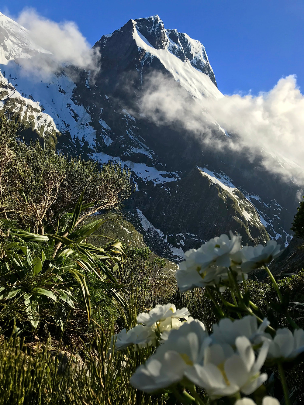 Mountain buttercups