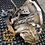 Boite de vitesses manuelle RENAULT MASTER II 2.5 DCI PK5008