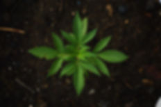 green-1648353_640.jpg