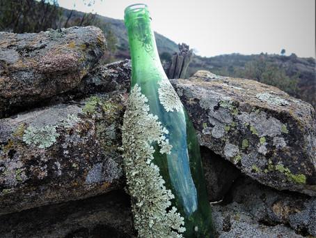 Lichen-Infested Bottle