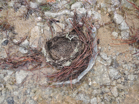 Surprising nests