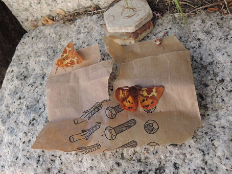Moths resting upon brown packaging paper
