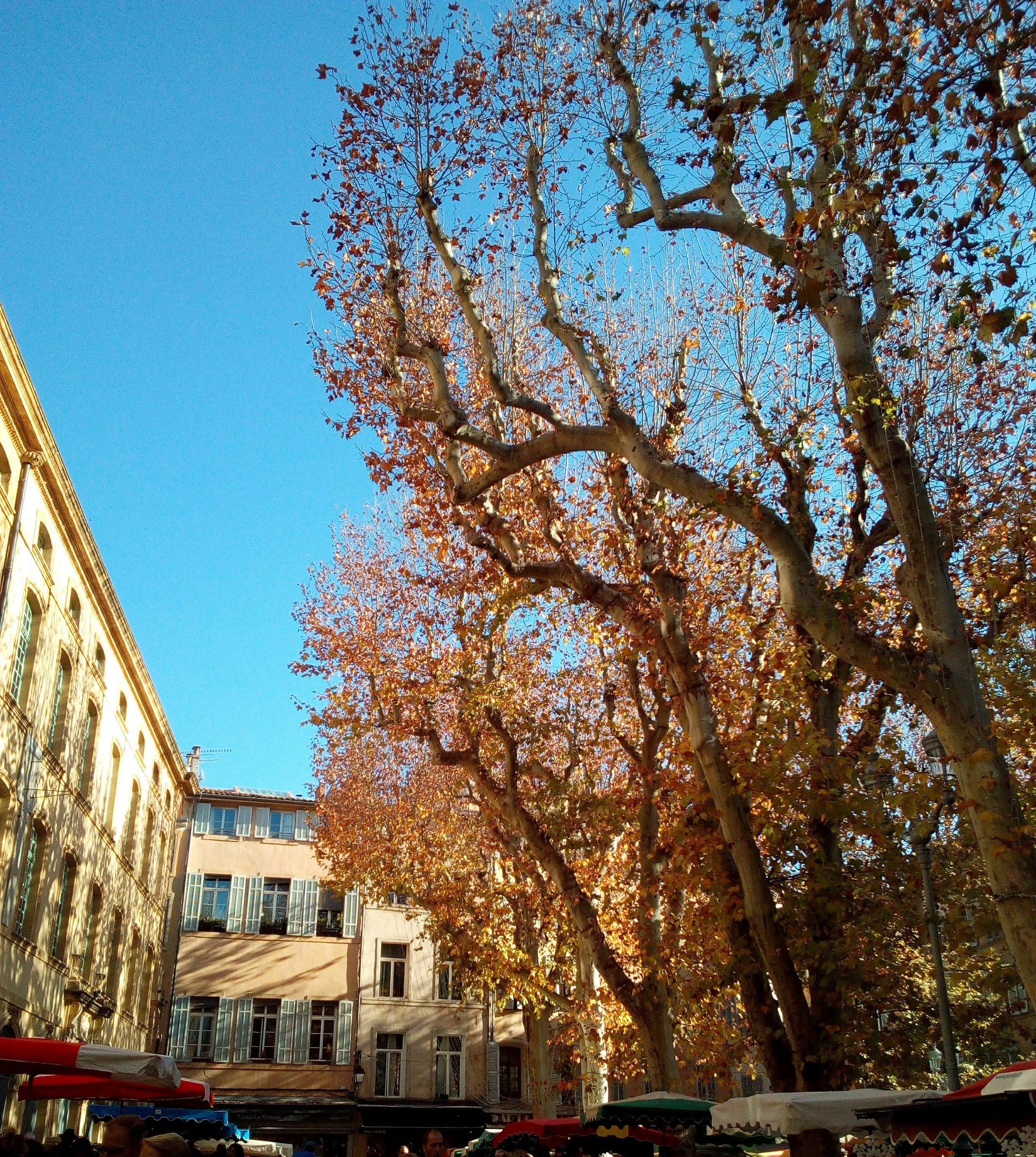 Arbres à Aix-en-Provence photo Isabelle Vitelli