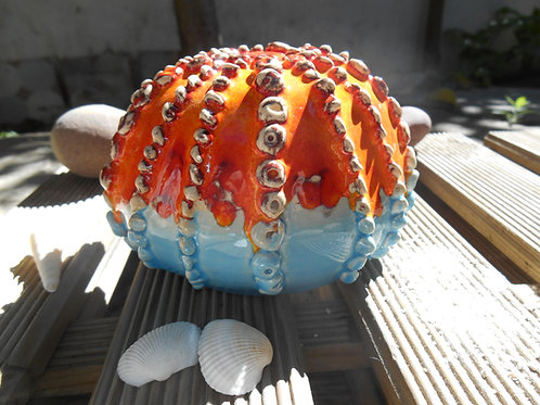 Oursin décoratif en couleur