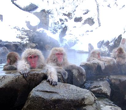 snowmonkeys RYUOO