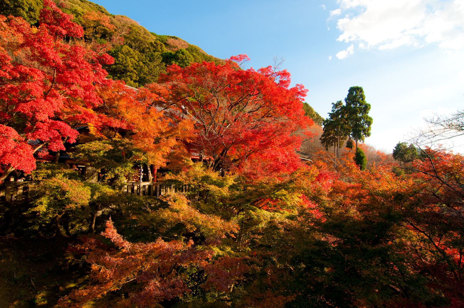 Autumn Japan color
