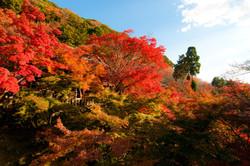 Autumn Japan color